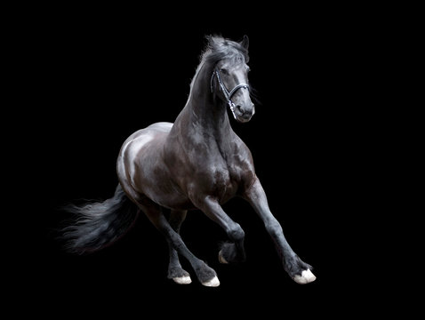 firesian horse running isolated on black background