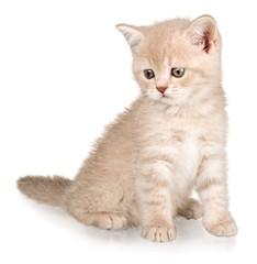 Domestic Cat, Kitten, Cute.