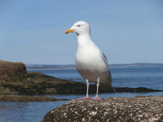 Seagull on rock at seaside