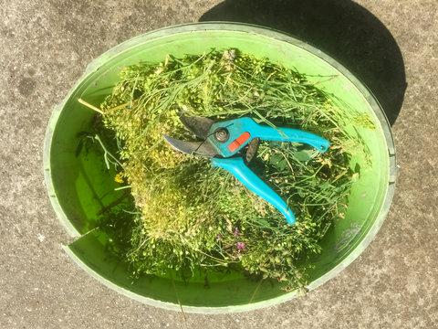 Gartenschere im Eimer mit Schnittgut