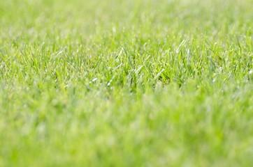 Grass, Lawn, Green.