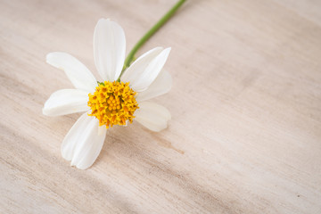Close up grass flower on wood table