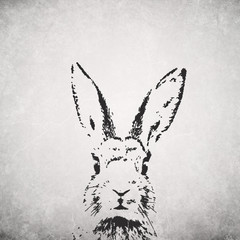 silhouette rabbit backround