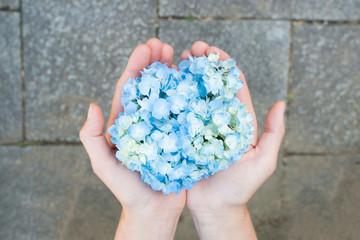 紫陽花の花を持つ女性の手