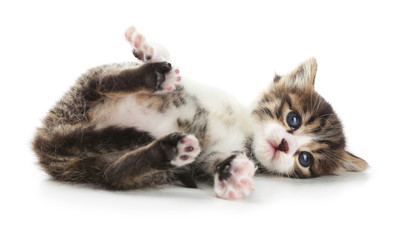 Cute little kitten, isolated on white