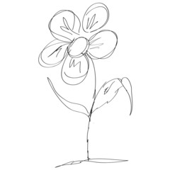 Sketch Illustration - camomile