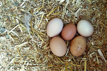 Eggs in the henhouse