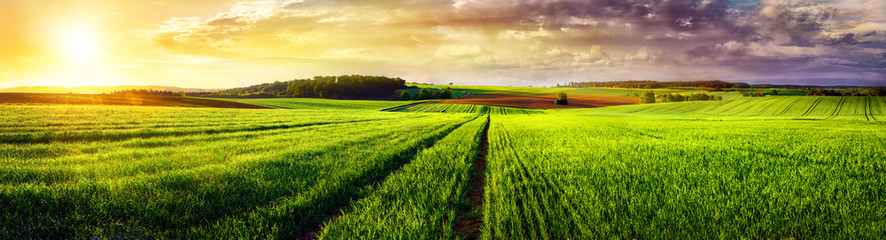 Tuinposter Lime groen Rural landscape sunset panorama