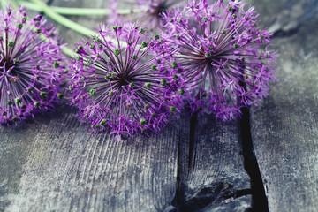 alium flowers on wooden surface