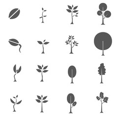 from seed to tree vector