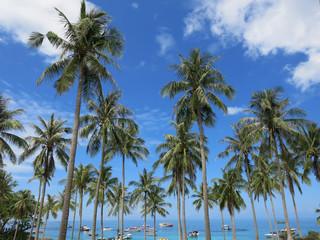 The Coconut Palm on the Beach