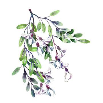 Robinias Twig