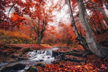 Mystical autumn beech  forest with lots of red fallen leaves and a small mountain creek with a bridge.