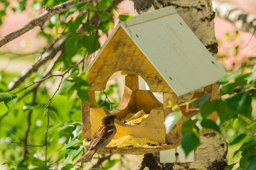 Pigeons around bird feeders