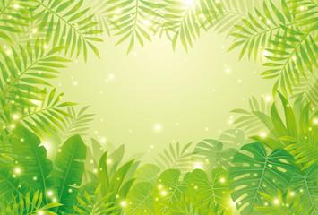 熱帯雨林 - fototapety na wymiar