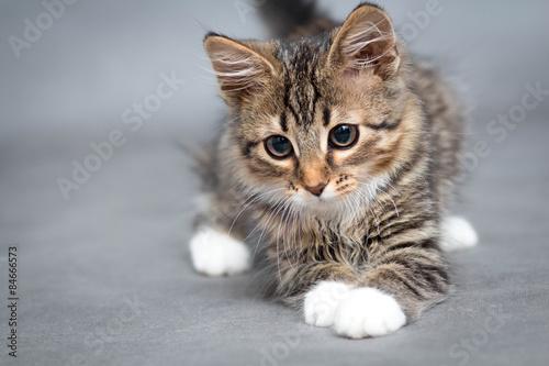will my kitten calm down after being neutered