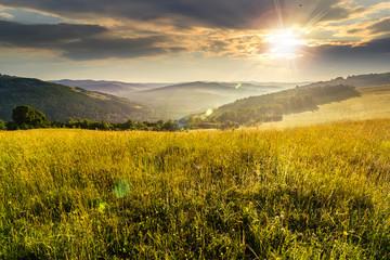 hillside meadow at sunset