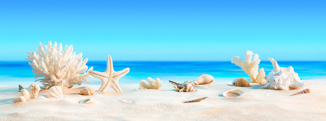 Landscape with seashells on tropical beach - summer holiday