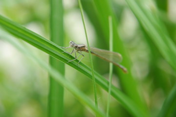 Nahaufnahme: Libelle