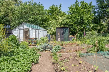 Citygarden with vegetables in plant beds and a greeenhouse