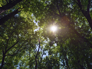 sun shines through the trees in the forest