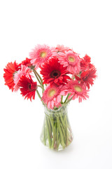 pink and red gerbera