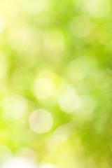 Abstract bright blurred yellow and green background