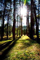 Timber garden plants