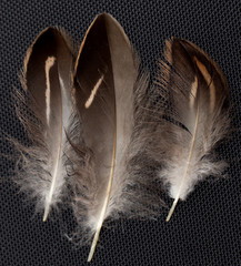 feathers on a black background