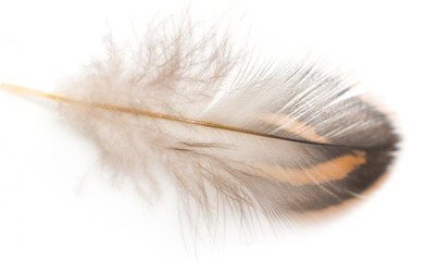 brown feathers on a white background