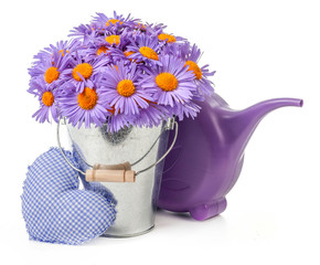 purple daisies in bucket isolated