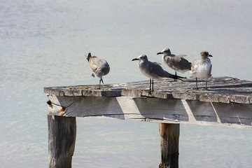 gabbiani sul pontile in attesa della preda