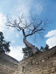 Angkor Watt temple complex, Cambodia