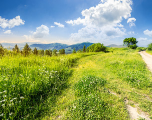 road through the meadow on hillside