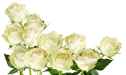 Beautiful  horizontal frame with bouquet of white roses  isolated on white background