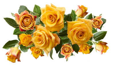 Beautiful  bouquet of yellowish orange roses isolated on white background