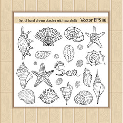 Vector set of hand drawn doodles with sea shells on white background. Sketches for use in design