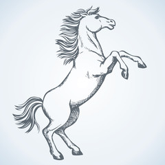 Horse began to buck. Vector drawing