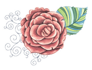Peony Flower isolated. Decorative watercolor flower clip art illustration.