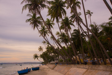 Morning.The sunset.Beautiful palm trees at the beach.Vietnam.