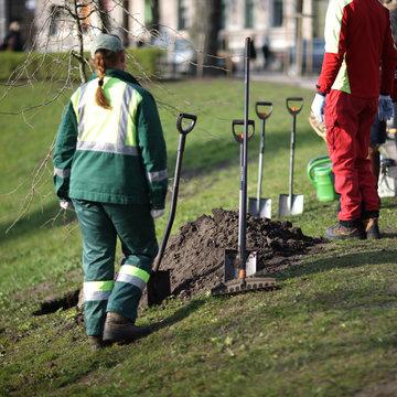 City park gardeners planting trees