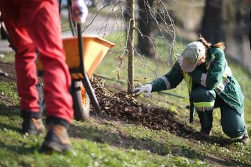 Woman in uniform planting a tree in a public park