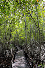 Boardwalk for nature trail in mangrove forest