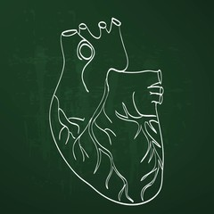 heart anatomy on the chalkboard chalk painted