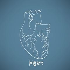 heart anatomy on the chalkboard chalk painted