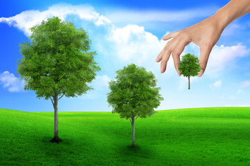 scene of the hand plant tree on green grass. Ecology concept