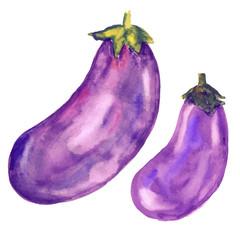 Eggplants set - vector watercolor hand painted illustration