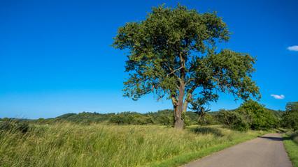 Alte Obstbäume im Feld