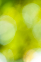 Green background with defocused lights