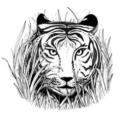Black and white vector sketch of a tiger's face.
